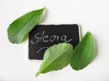 Stevia leaves and nameplate. Fresh stevia leaves and nameplate Royalty Free Stock Images