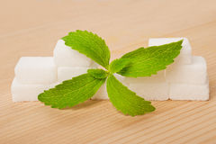 Stevia leaves royalty free stock images
