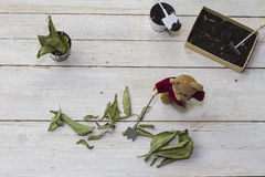 Stevia leaves with teddy Stock Image