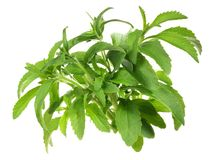 Stevia Leaves - Healthy Nutrition royalty free stock photo