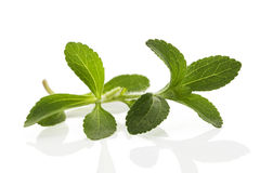 Stevia leaves on white. Stevia sweetleaf or sugarleaf on white background. Culinary aromatic cooking herbs Stock Image