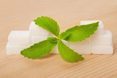 Stevia liście obrazy royalty free