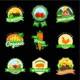 Stevia and Organic food label Set. Farm Fresh label and Logo element. Royalty Free Stock Image