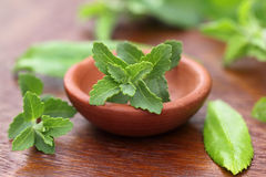 Stevia with other medicinal herbs Royalty Free Stock Photo