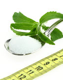 Stevia Rebaudiana Stock Photo