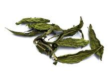 Stevia rebaudiana Bertoni, sugar substitute Stock Image