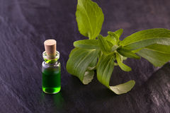 Stevia rebaudiana herb essence Stock Photography