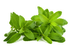 Stevia Stock Photo