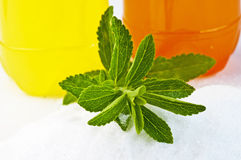 Stevia rebaudiana, support for sugar Royalty Free Stock Image