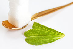 Stevia rebaudiana, support for sugar Stock Image