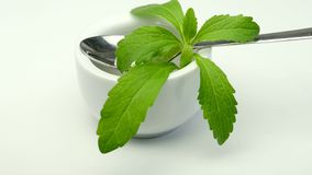 Stevia rebaudiana, support for sugar stock footage
