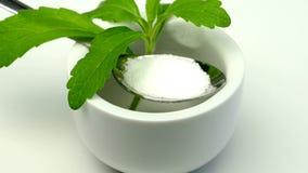 Stevia rebaudiana, support for sugar stock video