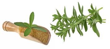 Stevia Royalty Free Stock Photo