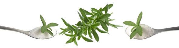 Stevia Stock Photos