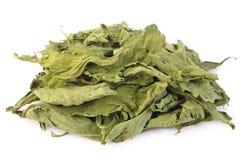 Stevia secado Fotografia de Stock Royalty Free