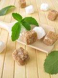Stevia and sugar cubes Stock Images
