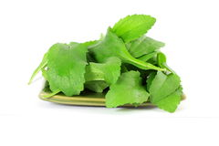 Stevia sugar substitute herbs leaves in pure white background Royalty Free Stock Images