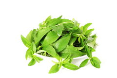 Stevia sugar substitute herbs in pure white background Royalty Free Stock Photo