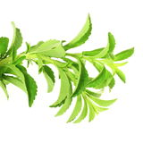 Stevia sugar substitute herbs in pure white  background Stock Photography
