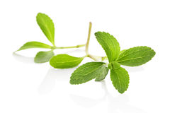 Stevia sugarleaf isolated. Stevia sugar leaf on white background. Healthy sugar alternative. Culinary herbs Stock Images