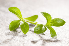 Stevia, sugarleaf. Stevia, sugarleaf on stone background. Healthy sugar alternative. Healthy lifestyle and eating Stock Images