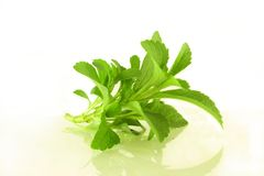 Stevia sweetener herb Royalty Free Stock Photography