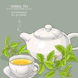 Stevia tea illustration Stock Photography