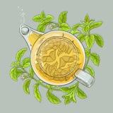 Stevia tea illustration Stock Photo