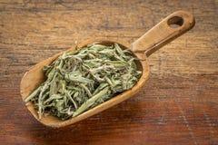 Stevia torkade sidor Arkivbilder