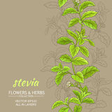 Stevia vector background Stock Photo