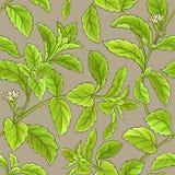 Stevia vector pattern Royalty Free Stock Photo