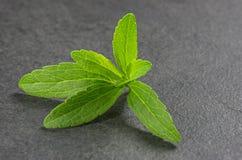 Steviablätter auf einer Schieferplatte Lizenzfreies Stockbild