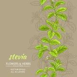 Steviavektorbakgrund Arkivfoto