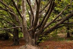 Stevige droge boom op de helling van berg Royalty-vrije Stock Foto's