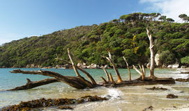 Stewart island beach Stock Images