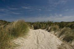 Stewart Island sand dunes. Stewart Island (Rakiura) sand dunes near Mason Bay. New Zealand stock photo