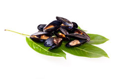 Stewed Mussels Royalty Free Stock Photography
