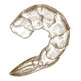 Stichillustration der Garnele stock abbildung