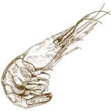 Stichillustration der Garnele lizenzfreie abbildung