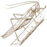 Stichillustration der Heuschrecke stock abbildung