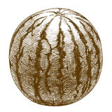 Stichillustration der Wassermelone vektor abbildung