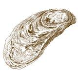 Stichillustration des Austernoberteils vektor abbildung