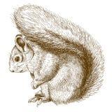 Stichillustration des Eichhörnchens stock abbildung