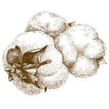 Stichillustration von Baumwolle lizenzfreie abbildung