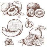 Stichillustration von süßen Früchten und von Beeren vektor abbildung