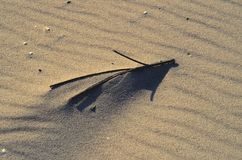 The stick. Stick in beach sand among a ripples made by wind Royalty Free Stock Image