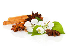 Stick cinnamon, anise star and apple flowers Stock Image