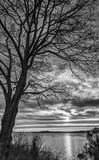 Black and White Leafless Tree with Tug Boat at Sunset over Puget Sound. Incredible Clouds come to Life in the Monochrome Sunset Image with Tug Boat and Tree Stock Photos