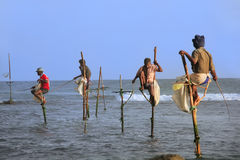 Stick fishermen in Unawatuna, Sri Lanka Royalty Free Stock Image