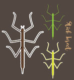 Stick Insects Vectors Stock Photography